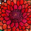 Flower Series 8